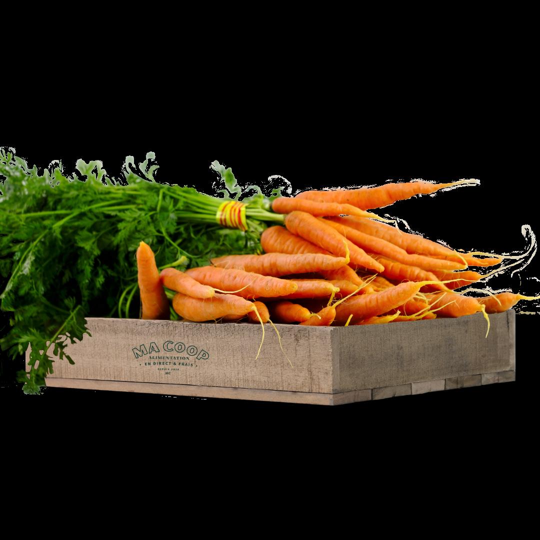 botte de carotte fane
