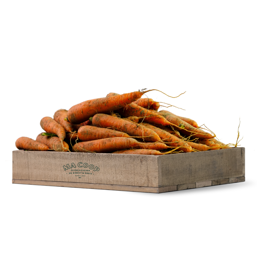 carotte des sables