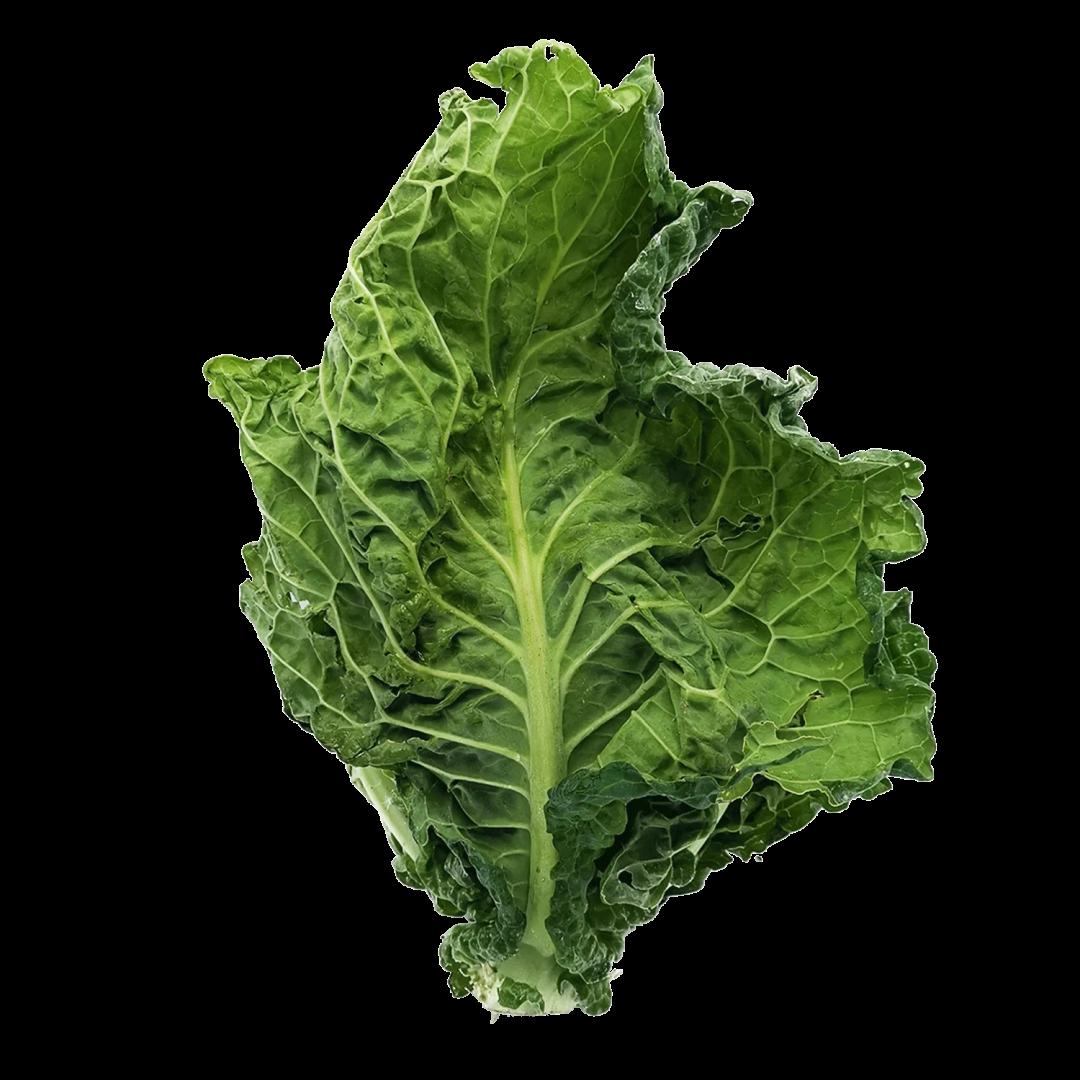 feuille de chou vert