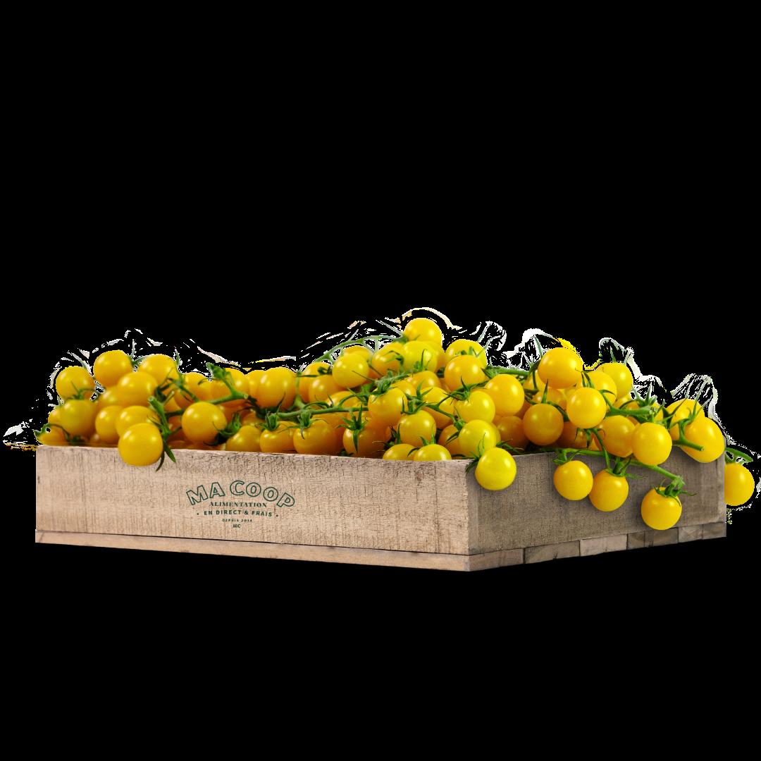 tomate cerise jaune grappe